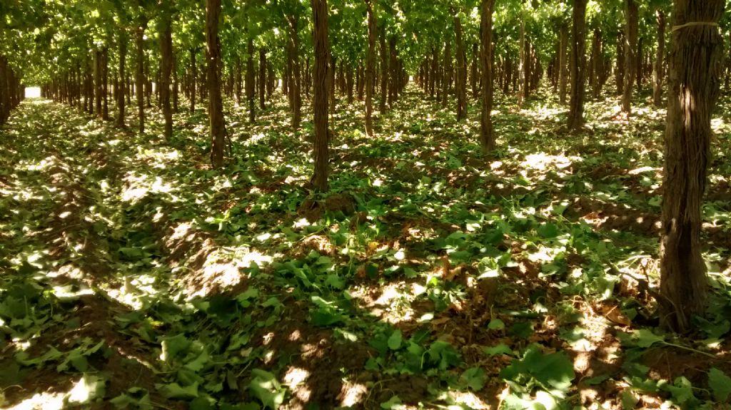 Sarmiento: El granizo afectó unas 1.000 hectáreas - Canal 13 San ...