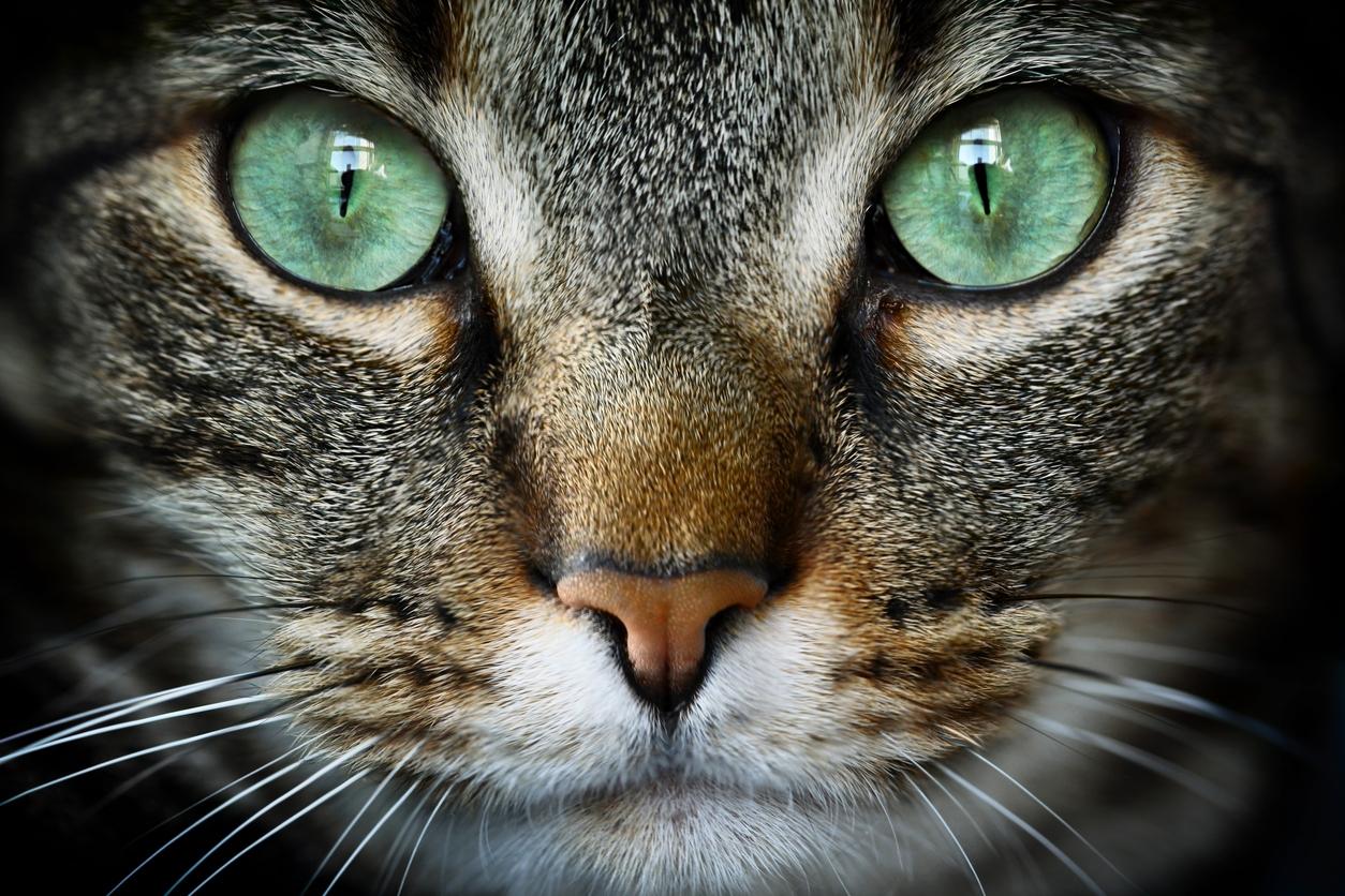 Lo condenaron a dos años de prisión por matar a un gato