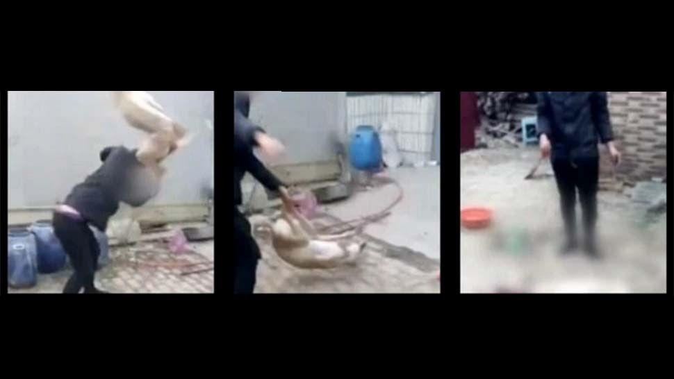 #VIDEO Mata a su perro con GOLPIZA tras perder carrera