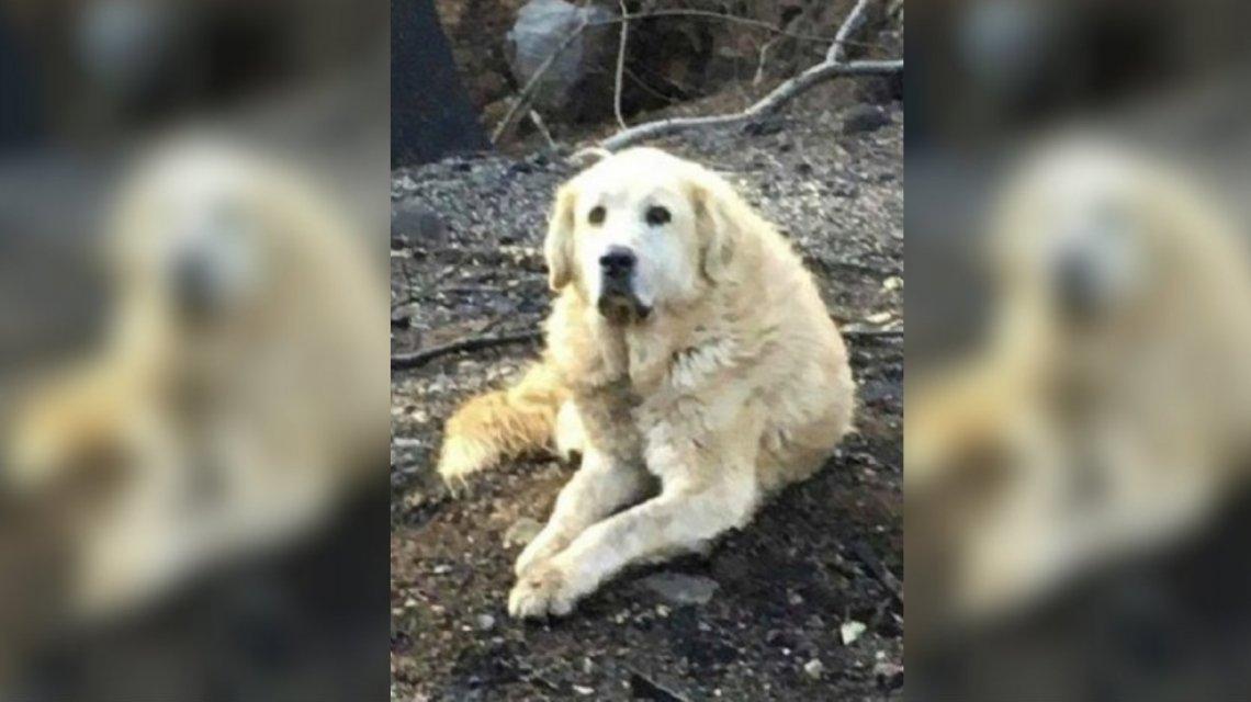 Un Hachiko en California: Tras incendio, perro aún esperaba a sus dueños