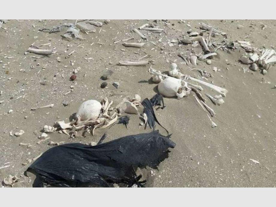 Turistas recorrían Península Valdés y encontraron 20 esqueletos humanos en la costa