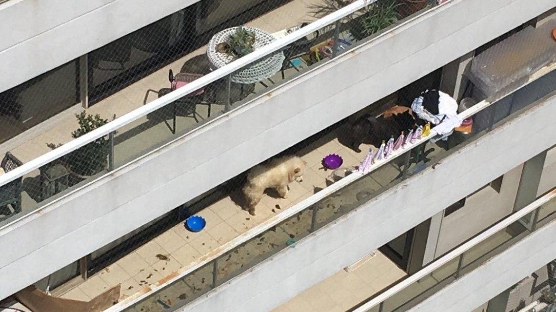 Así estarían los perros de More Rial, encerrados en el balcón