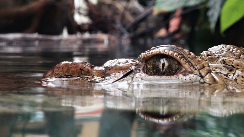 Hallan el cadáver de un 'monstruo del lago Ness' en EU