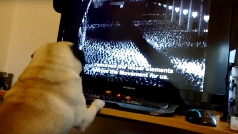 Le enseña a perro saludo nazi