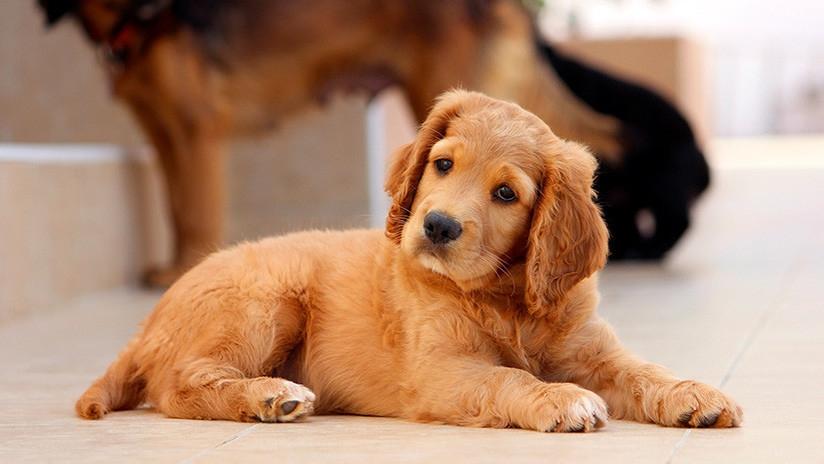 El perro que tiene cara de ser humano