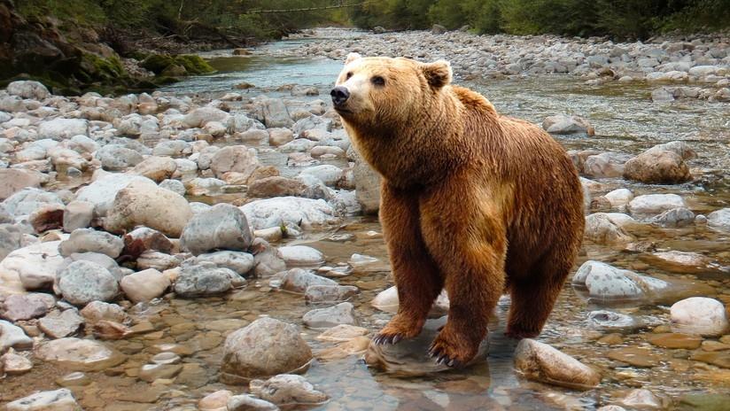 Mujer regaña a oso con su 'voz de mamá' y este obedece