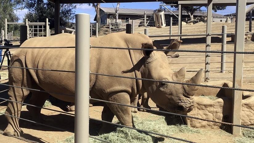 Niña cae dentro de exhibición de rinocerontes en un zoológico de Florida