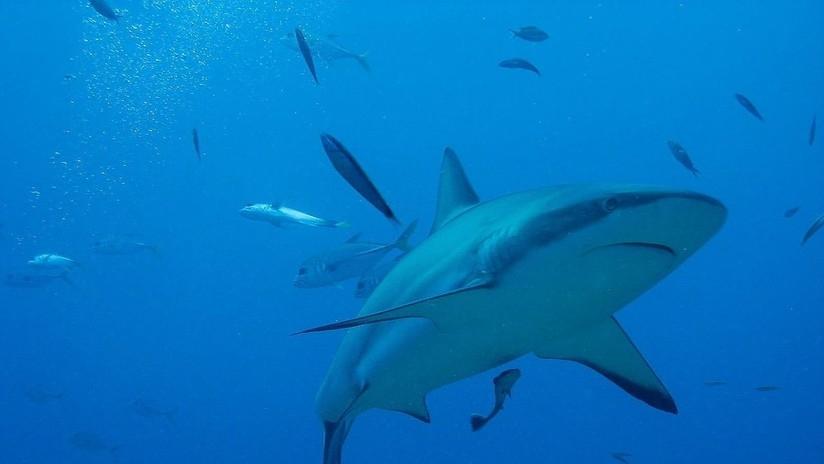 NAUTICA TIEMPO WINDGURU: Ataque de tiburón blanco a un buzo