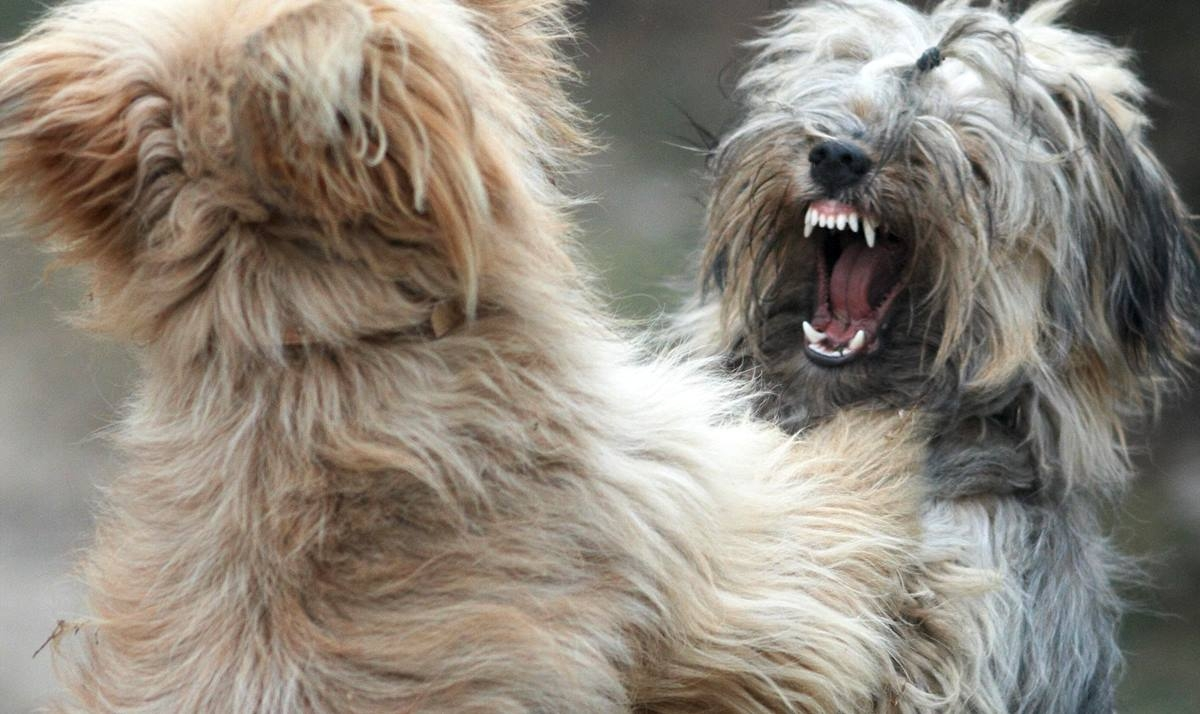 Increíble pero real: los perros también hacen bullying - Canal 13 San Juan TV