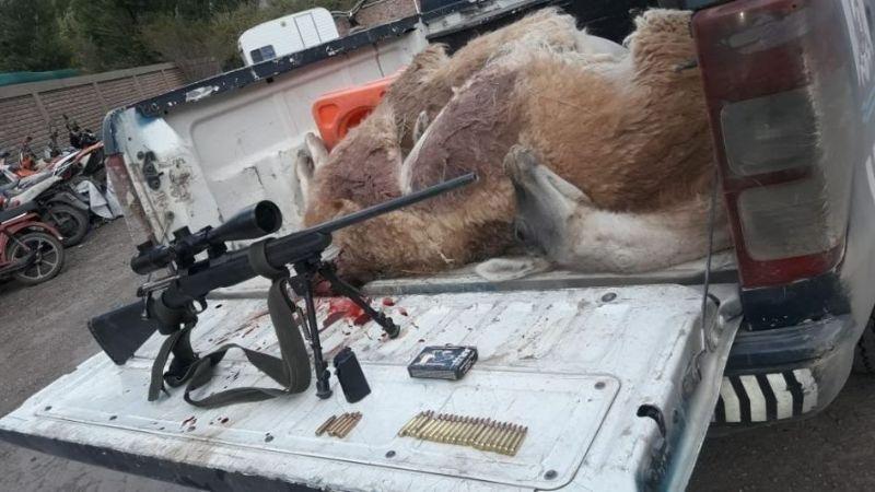 Detuvieron dos cazadores con dos guanacos muertos:la hembra estaba preñada